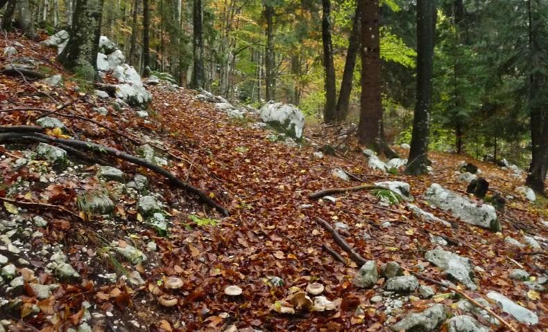 Casera basson 1271 m dolomiti di destra tagliamento e for Casera m bel